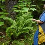 23 Giant lady fern
