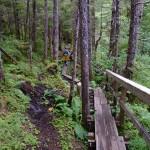 4 Narrow boardwalk over logs