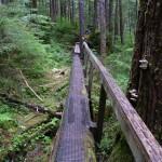 5 Log boardwalk