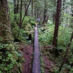 6 more log boardwalk
